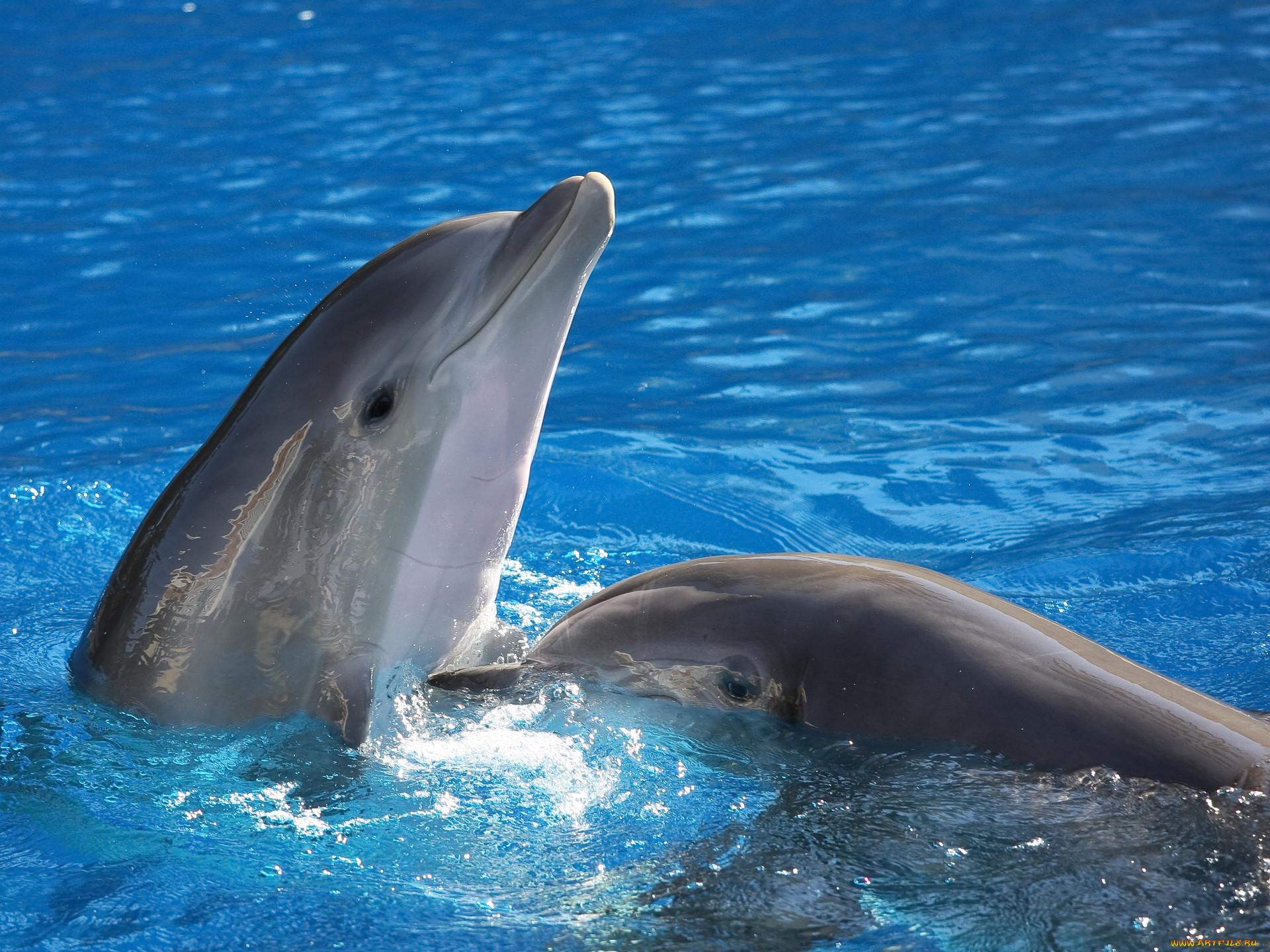 дельфин фото животное картинки начала толкаться